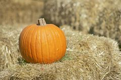 Pumpkin on hay Royalty Free Stock Image