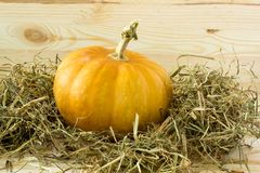 Pumpkin and hay isolated Royalty Free Stock Photography
