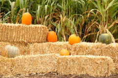 Pumpkin and hay stack no.2 Stock Image