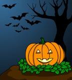 Pumpkin Head Royalty Free Stock Photo