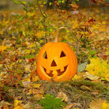 Pumpkin-head and autumn leaves and grass Royalty Free Stock Image