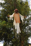Pumpkin head ghost hanging in a tree for Halloween,. Prefect to scare off the trick-or-treaters Stock Photos