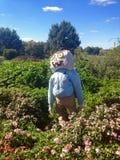 Pumpkin head scarecrow Stock Image