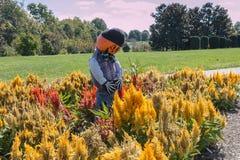 Pumpkin head scarecrow Stock Images