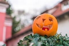 Pumpkin head Stock Photos