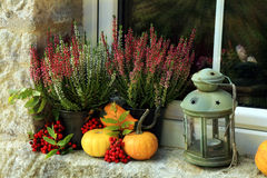 Pumpkin, heathers and lantern on window. Royalty Free Stock Image
