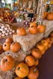 Pumpkin heaven Stock Photos