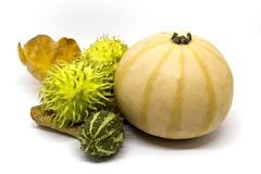 Pumpkin, horned melon vegetables. Two types of vintage vegetables, pumpkin, two horned melons on a dry leaf isolated on white Stock Photo
