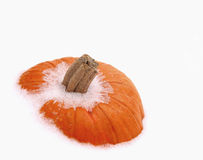 Pumpkin on ice. Orange pumpkin in white snow stock photography