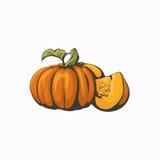 Pumpkin  illustration. Stock Photo