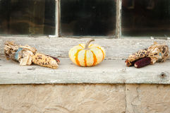 Pumpkin and indian corn royalty free stock images