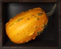 Pumpkin inside a wooden box. Yellow pumpkin inside a wooden box Royalty Free Stock Photography