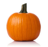 Pumpkin isolated. Close up of a pumpkin isolated on white background stock photos