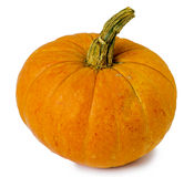 Pumpkin isolated on white. Background royalty free stock photos