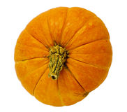 Pumpkin isolated on white. Background royalty free stock photo