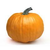 Pumpkin Isolated on White. Royalty Free Stock Photos
