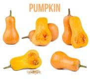 Pumpkin isolated Stock Photos