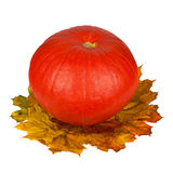 Pumpkin isolated on a white background Royalty Free Stock Photo