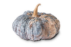 Pumpkin isolated on white background Stock Photos