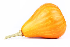 Pumpkin   isolated white background. Fresh pumpkin  isolated white background Royalty Free Stock Photography