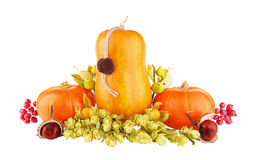 Pumpkin isolated on white royalty free stock photography