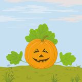 Pumpkin Jack O Lantern Royalty Free Stock Photography