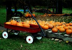 Pumpkin and a kids wagon Royalty Free Stock Images