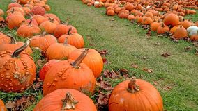 Pumpkin lane - A Halloween Delight stock photos