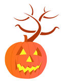 Pumpkin with large carved scary evil face Stock Images