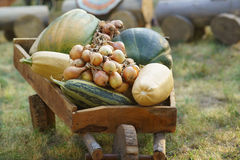 Pumpkin lat. Cucurbita, onion lat. Allium cepa and other vegetables in a wooden cart Royalty Free Stock Image