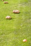 Pumpkin on the lawn Royalty Free Stock Photography