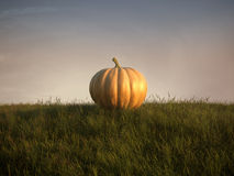 Pumpkin on lawn Royalty Free Stock Photo