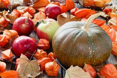 Pumpkin lay on fall leaf. Harvest and Thanksgiving day concept Stock Photo