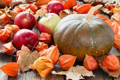 Pumpkin lay on fall leaf. Harvest and Thanksgiving day concept Royalty Free Stock Images