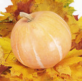 Pumpkin on leaf Royalty Free Stock Photo