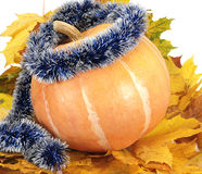 Pumpkin on leaf Stock Image