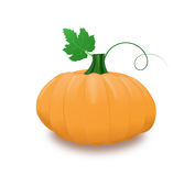 Pumpkin with leaf and curl Royalty Free Stock Photography