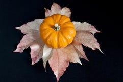 Pumpkin on leafs. Orange pumpkin and leafs on black background Stock Photos