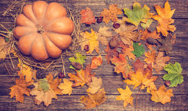 Pumpkin, leafs and chestnuts with cone Royalty Free Stock Photos