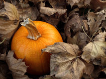 Pumpkin in leaves Stock Photos