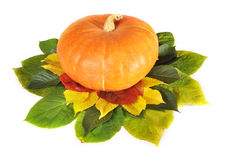 Pumpkin on leaves Royalty Free Stock Image