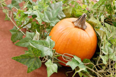 The Pumpkin In Leaves Stock Photography