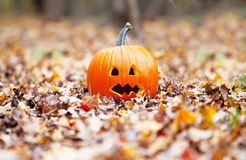Pumpkin in  leaves Stock Images