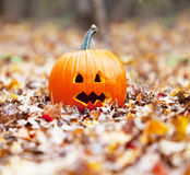 Pumpkin in  leaves Royalty Free Stock Image
