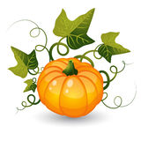 Pumpkin with leaves Stock Photos