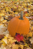 Pumpkin and leaves. Pumpkin in field of fallen maple leaves Stock Photography