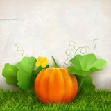 Pumpkin Leaves Grass Stock Photo