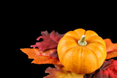 Pumpkin and Leaves Isolated on Black Royalty Free Stock Images