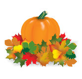 Pumpkin leaves. Orange pumpkin in autumn leaves Stock Images