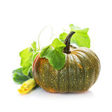 Pumpkin with leaves over white Stock Images